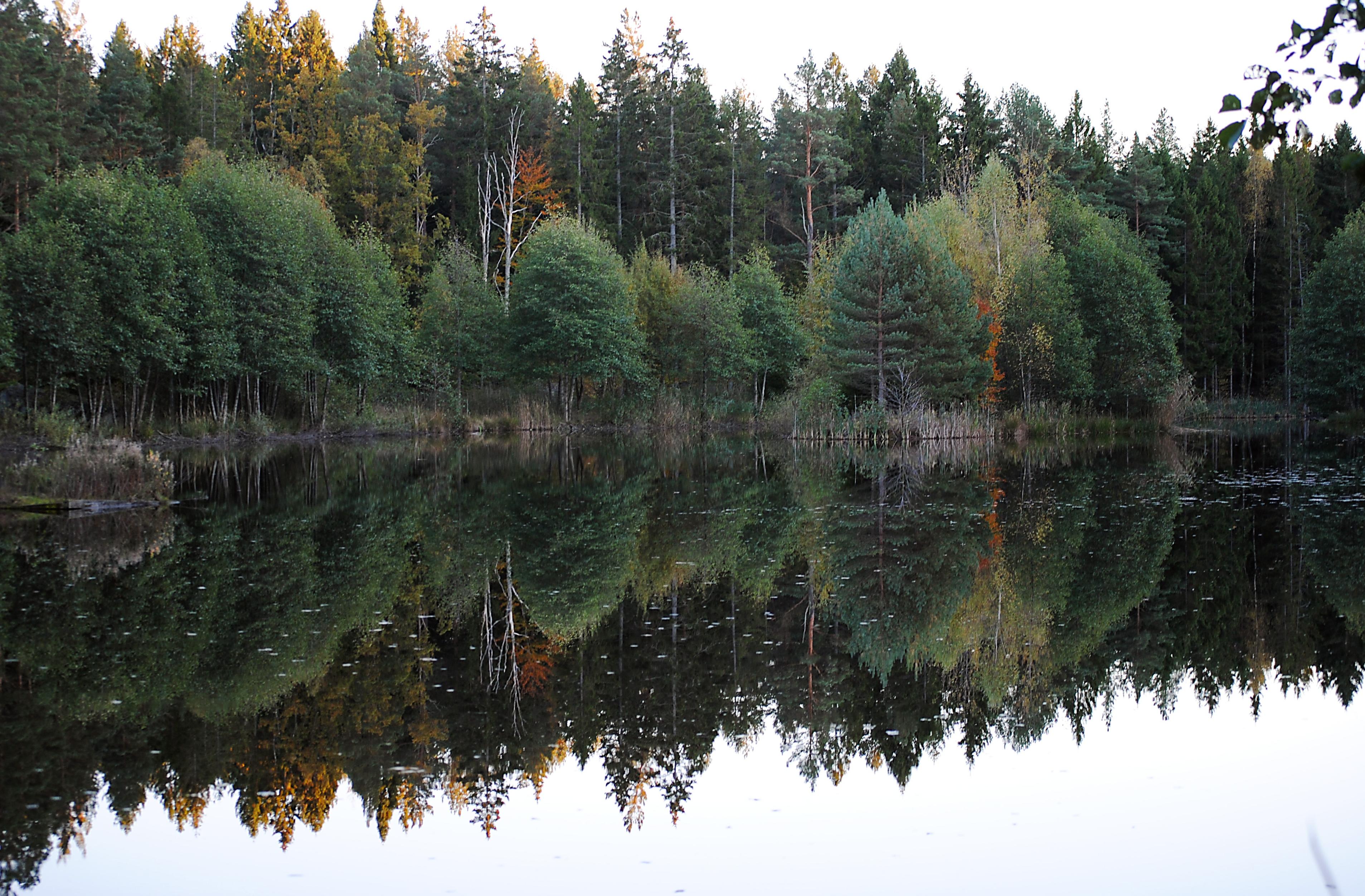 daphne skoglund hennepin countyrecords